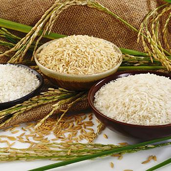 מתכונים-אורז